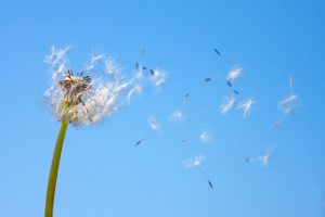 Tips To Avoid Summer Allergies