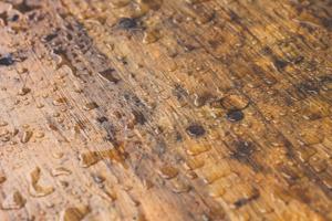 Keeping Moisture From Harming Your Hardwood Floors